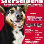 koncert dla schroniska dla bezdomnych zwierząt